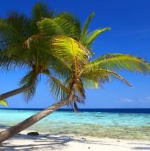 Auf die Malediven reisen